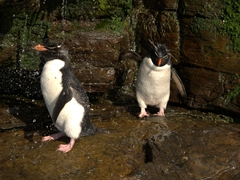 Penguin shower quickly became our favorite place at the rookery
