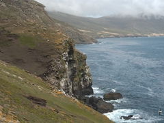 Cliffs of the rookery
