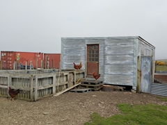 Chicken shack at the settlement
