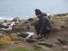 A curious albatross checks up on Becky to see what she is up to