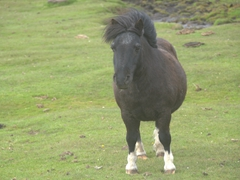 Pony at the settlement