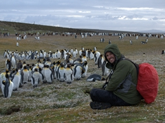 Robby enjoying the company of molting king penguins