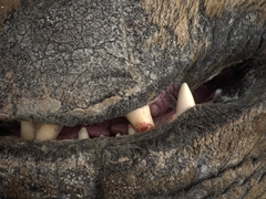 Close up of a bull elephant seal's teeth