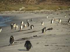 Penguins preening themselves on the beach in the late afternoon