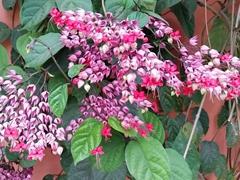 Pretty flowers; Suchitoto