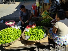 Green mangoes for sale; Santa Ana