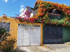An explosion of colorful flowers; Juayua