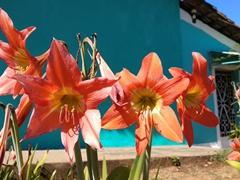 A splash of color; Suchitoto
