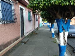 Even the trees are painted in picturesque Juayua