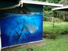 Whale shark mural; Cocos Island