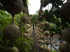 Bridge made from recycled buoys; Cocos Island