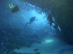 Big Dos Amigos swim through tunnel