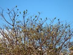 Dozens of parrots chilling near our room; Santa Cruz Hostel