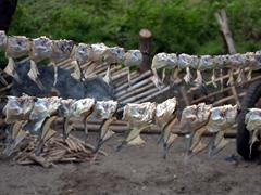 Dried fish from Lake Nicaragua; Santa Cruz