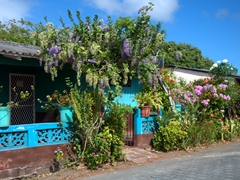 Colorful scene near Playa Santo Domingo