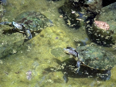 Turtles; Charco Verde ecological park