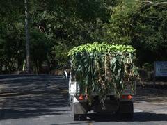 Plantain truck; Ometepe