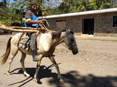 Horse transport - a common sight on Ometepe