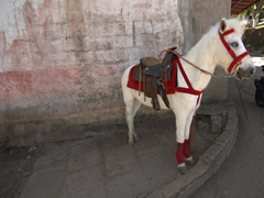 Horse rides available at Apoya Lagoon