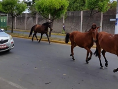 Horses taking over the road; Granada