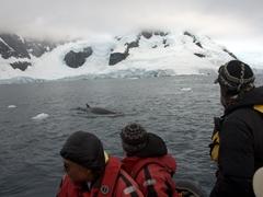Spotting an elusive minke whale
