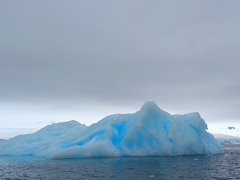 Blue iceberg; Fournier Bay
