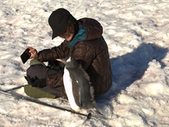 Gentoo penguin making a new friend; Petermann Island