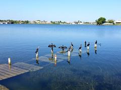 Cormorants on a sunken pier; Flores