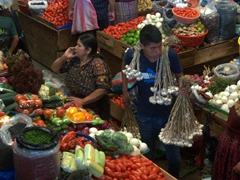 Garlic seller; Panajachel market