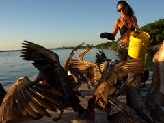 Feeding the pelicans - our nightly ritual on Caye Caulker