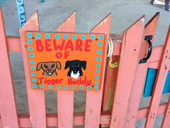 """Tigger and Buddy - our """"guard"""" dogs at Yuma's House; Caye Caulker"""