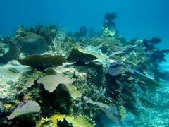 Sunken barge shipwreck