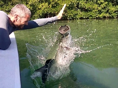 Robby teasing a tarpon by pretending to feed it food