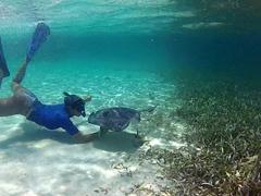 Becky filming a playful southern stingray