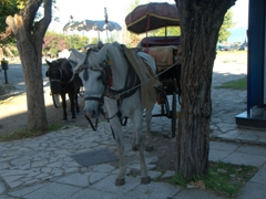 Horse carriages standing by for tourist sightseeing trips