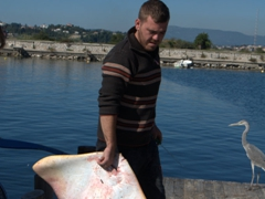 Fisherman getting ready to slice up a sting ray; Pontikonisi
