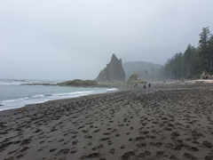 Rialto Beach; Olympic National Park