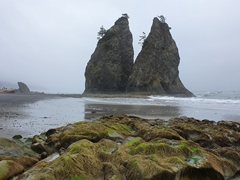 Sea stacks; Rialto Beach