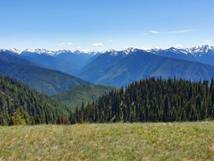 View of Hurricane Ridge; Olympic National Park