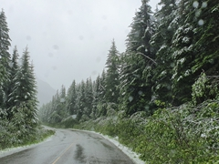 A snowy summer day as we decide to visit the Miette Hot Springs
