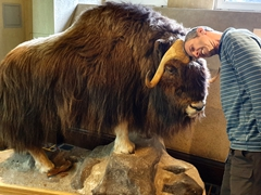 Robby and a bison go head to head; Fairmont Banff Springs