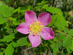 Friendship trail flower