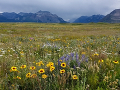 Wildflowers in bloom; Bison Paddock