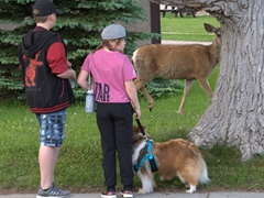 Two kids walk their dog past a curious deer; Waterton
