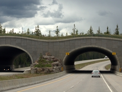 """An ingenious idea - animal """"highways"""" to keep animals safe over a busy road"""