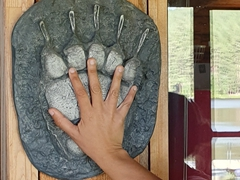 Grizzly paw versus human hand; Placid Lake
