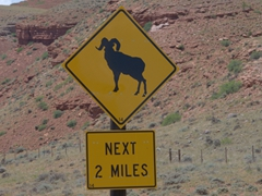 Bighorn sheep sign; Route 26