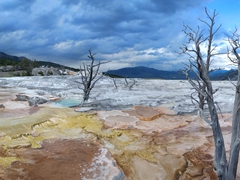 Colored terraces of Mammoth Hot Springs
