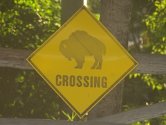 Bison crossing sign; Mormon Row