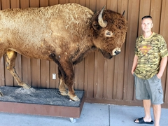 Robby and a bison; Wall Drug